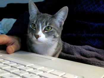 Typing Companion